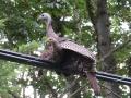 'Wild' Turkey