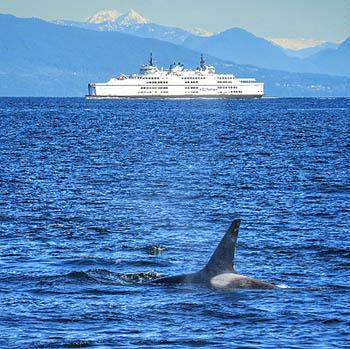 orca3